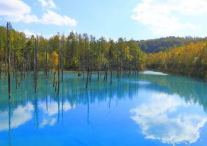 白金青い池